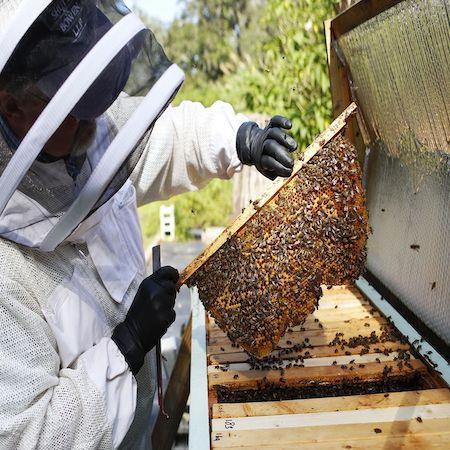 Local Beehive Tour